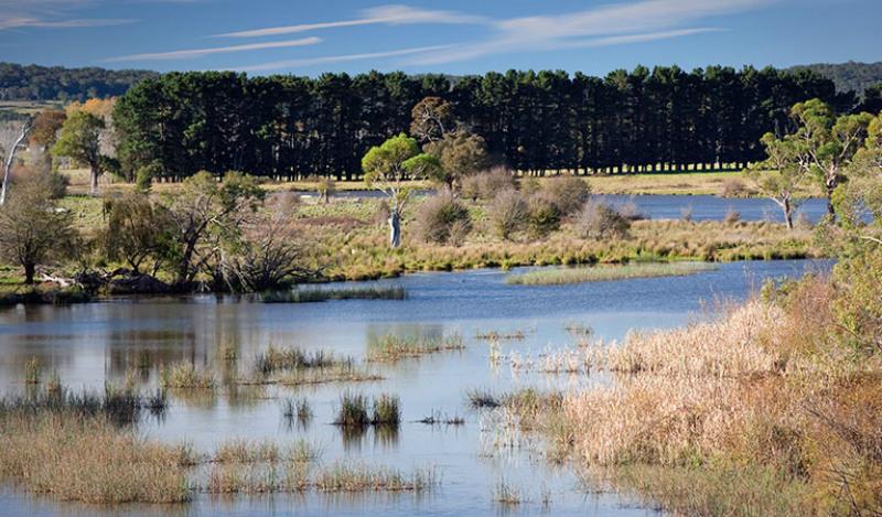Wingecarribee River wetlands